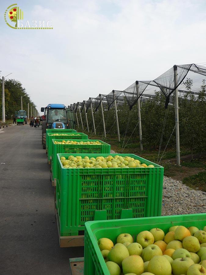 Производство пластиковых контейеров и ящиков
