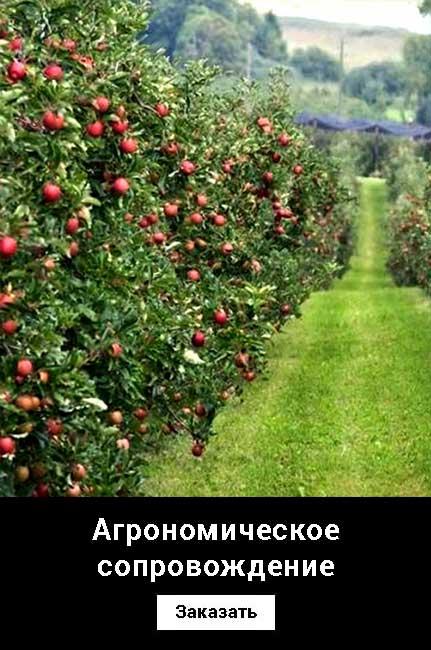 Агрономическое сопровождение