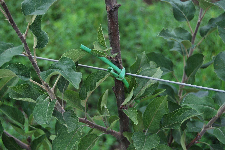 Резина для подвязки