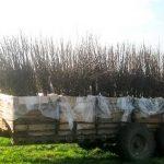 Посадка саженцев и агрономическое сопровождение